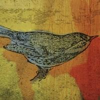 Warbler 1 Fine Art Print