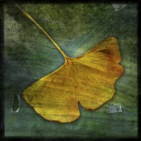Gingko 3 by John W. Golden - various sizes - $16.99