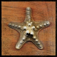 Armored Starfish by John W. Golden - various sizes