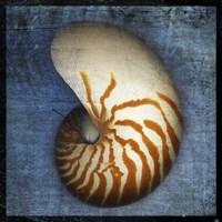 Nautilus by John W. Golden - various sizes