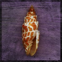 Orange Shell by John W. Golden - various sizes