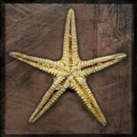 Starfish by John W. Golden - various sizes