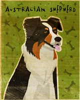 Australian Shepherd by John W. Golden - various sizes - $25.49