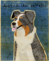 Australian Shepherd Blue Merle by John W. Golden - various sizes - $25.49
