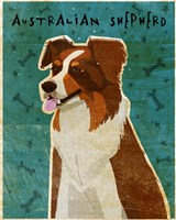 Australian Shepherd Red by John W. Golden - various sizes - $25.49