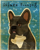 French French Bulldog - Black Brindle and White Fine Art Print