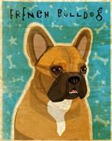 French Bulldog Fawn & White Fine Art Print