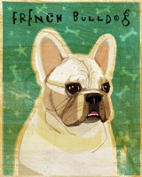 French Bulldog - White Fine Art Print