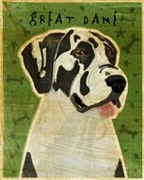 Harlequin Great Dane 2 Fine Art Print