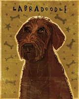 Chocolate Labradoodle by John W. Golden - various sizes