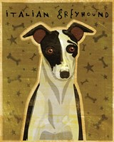 Italian Greyhound - Black and White by John W. Golden - various sizes