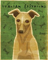 Italian Greyhound - Fawn Fine Art Print