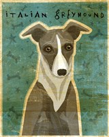 Italian Greyhound - White and Grey Fine Art Print