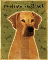 Rhodesian Ridgeback Fine Art Print