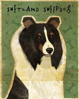 Shetland Sheepdog - Tri-Color by John W. Golden - various sizes