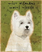 West Highland Terrier by John W. Golden - various sizes