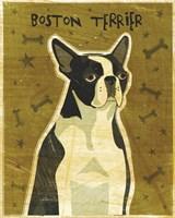 Boston Terrier by John W. Golden - various sizes