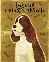 English Springer Spaniel by John W. Golden - various sizes