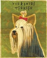 Yorkshire Terrier by John W. Golden - various sizes