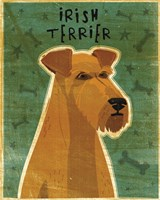 Irish Terrier Fine Art Print