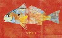 Spot Framed Print
