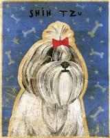 Shih Tzu by John W. Golden - various sizes