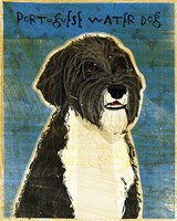 Portuguese Water Dog Fine Art Print