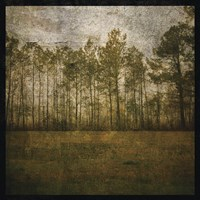 A Line of Pines Fine Art Print