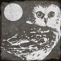 Owl 3 by Color Bakery - various sizes