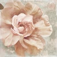 Petals Impasto I Fine Art Print