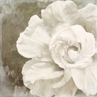 Petals Impasto II by Color Bakery - various sizes