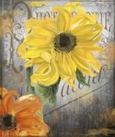 Sunflower Studio Framed Print