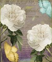 White Roses Framed Print