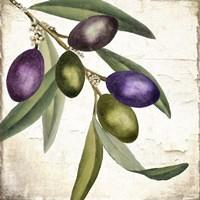 Olive Branch I Framed Print