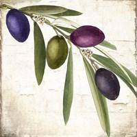 Olive Branch IV Fine Art Print
