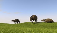 Eurohippus Grazing by Kostyantyn Ivanyshen - various sizes