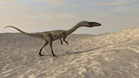 Coelophysis Walking through Desert Fine Art Print