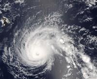Hurricane Flossie - various sizes - $47.99