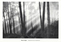 """Mystical Forest & Sunbeams by Monte Nagler - 39"""" x 28"""""""