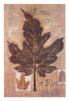 Harvest II Fine Art Print