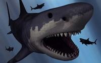 A Megalodon Shark by Mark Stevenson - various sizes, FulcrumGallery.com brand