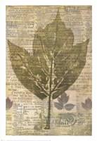 Harvest III Fine Art Print