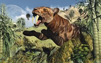 Sabre Tooth Tigers
