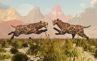 Sabre Tooth Tigers by Mark Stevenson - various sizes
