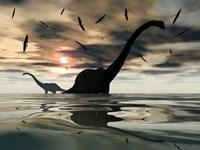 Diplodocus Dinosaurs by Mark Stevenson - various sizes, FulcrumGallery.com brand