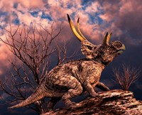 Diabloceratops by Philip Brownlow - various sizes