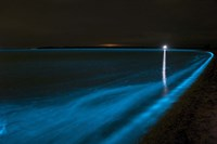Bioluminescence in Waves in the Gippsland Lakes Fine Art Print