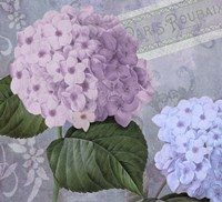 Hortensia 2 by Color Bakery - various sizes