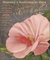 Peach Hibiscus Fine Art Print