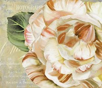 Camellias I by Color Bakery - various sizes - $32.49